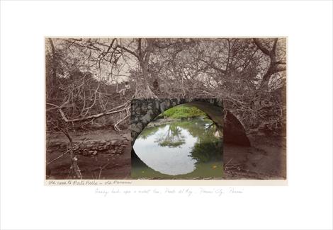 Trees around the bridge to Porto Bello